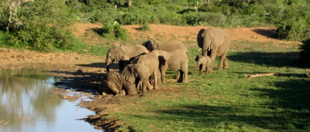 Südafrika 2007 Elefant