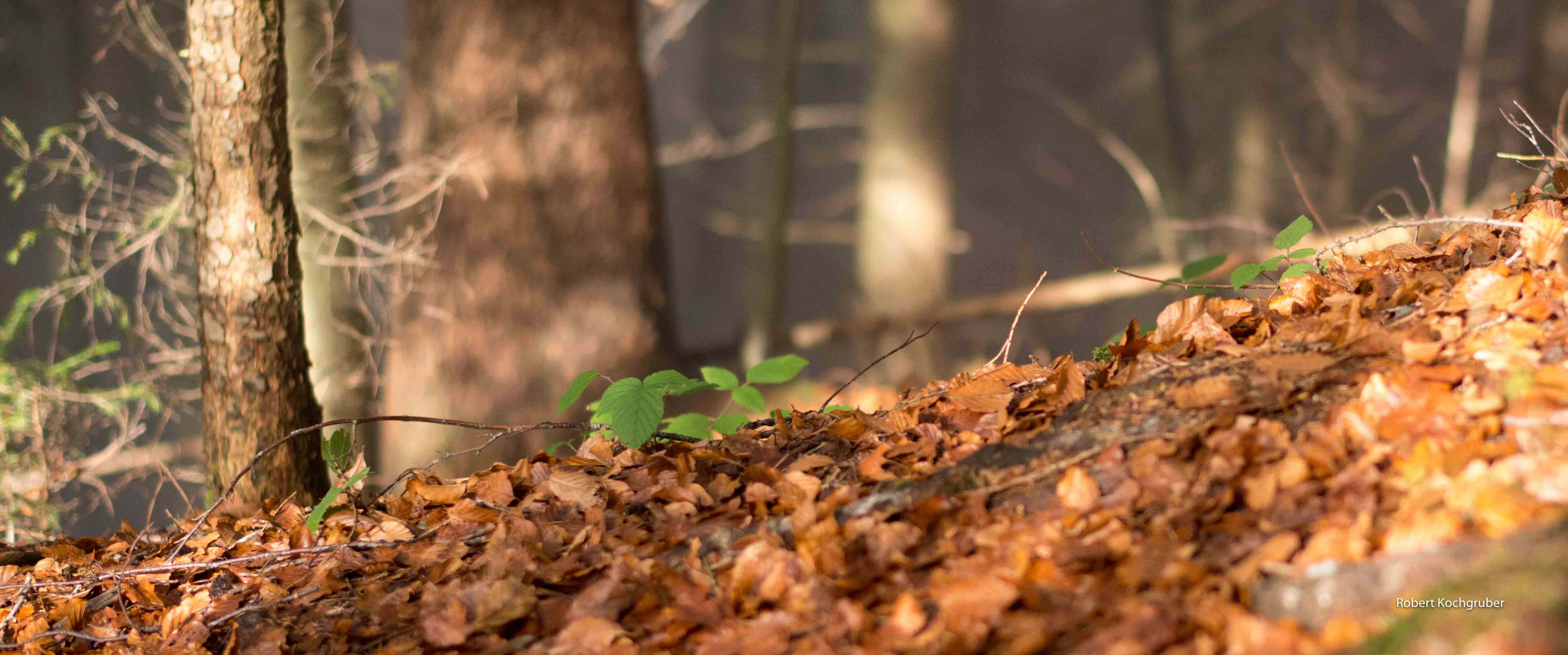 Laubwald-Gaiser-Herbst