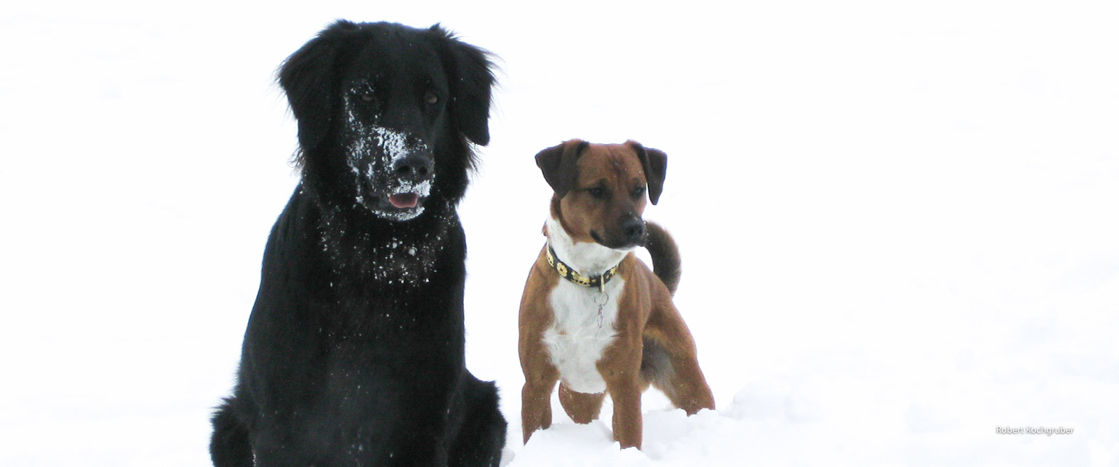 hunde-im-schnee-nurmut-weihnachtsgeschichte