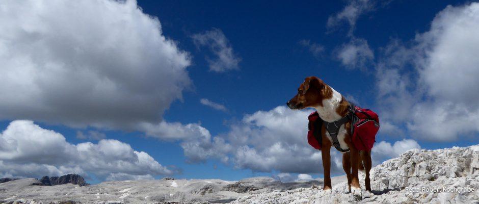 piz boé-hund mit rucksack-monet-muenchen-venedig-zu-fuss-mit-hund