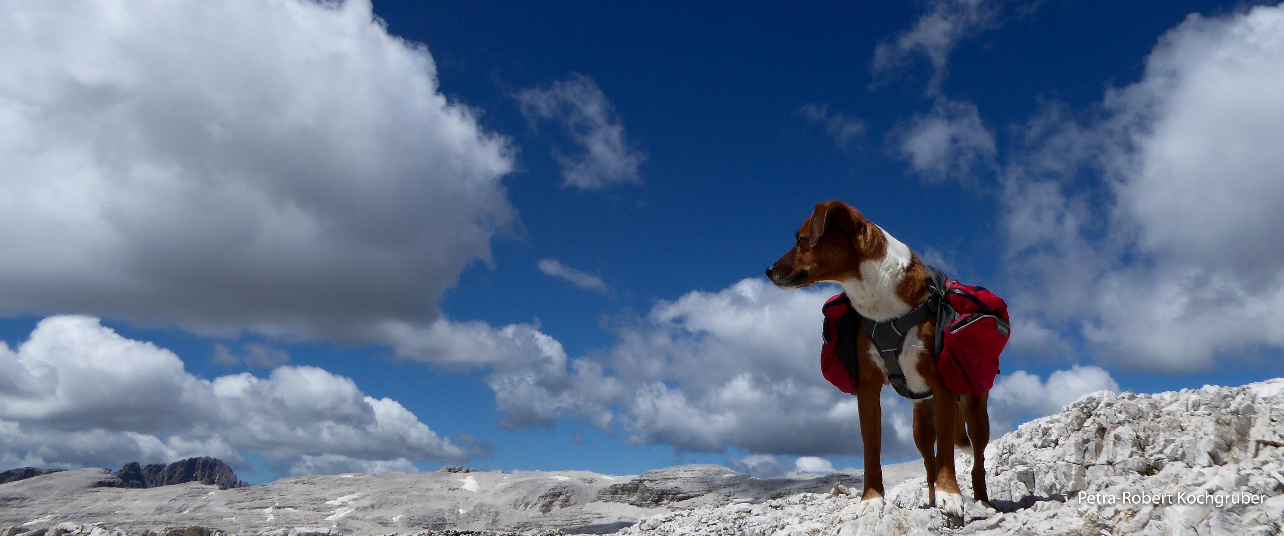 piz boé-hund mit rucksack-monet-muenchen-venedig-zu-fuss-mit-hund München-Venedig zu Fuss mit Hund