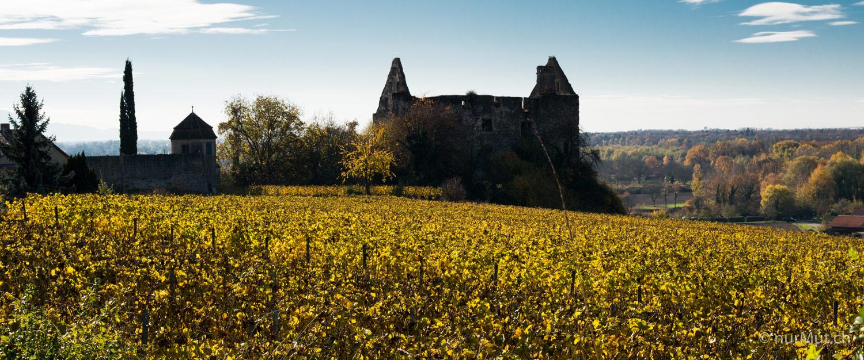 Herbstlicher Suedwesten-Kaiserstuhl