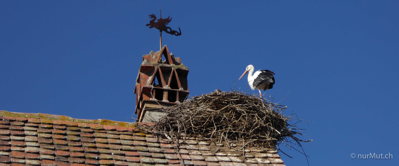 Herbstlicher Suedwesten-Elsass-Ecomusée-Storch