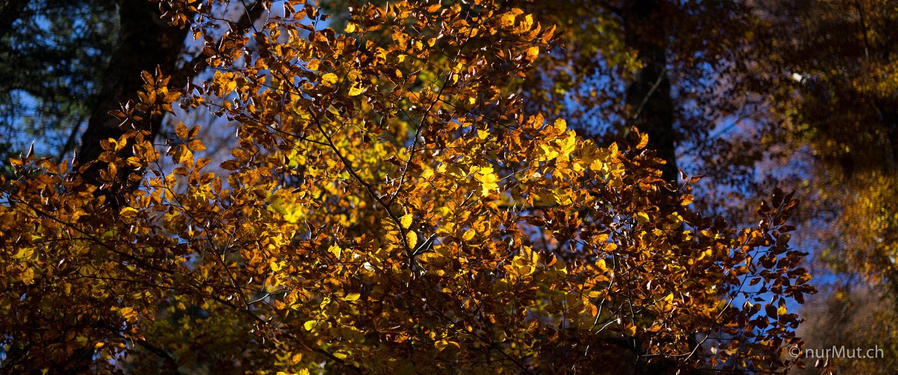 Herbstlicher Suedwesten-Vogesen