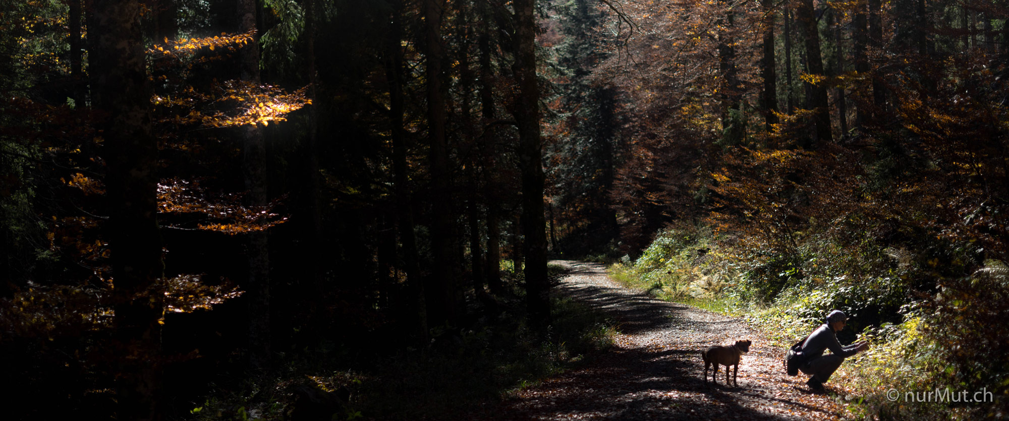 Herbstlicher Suedwesten-Elsass-Thierenbach