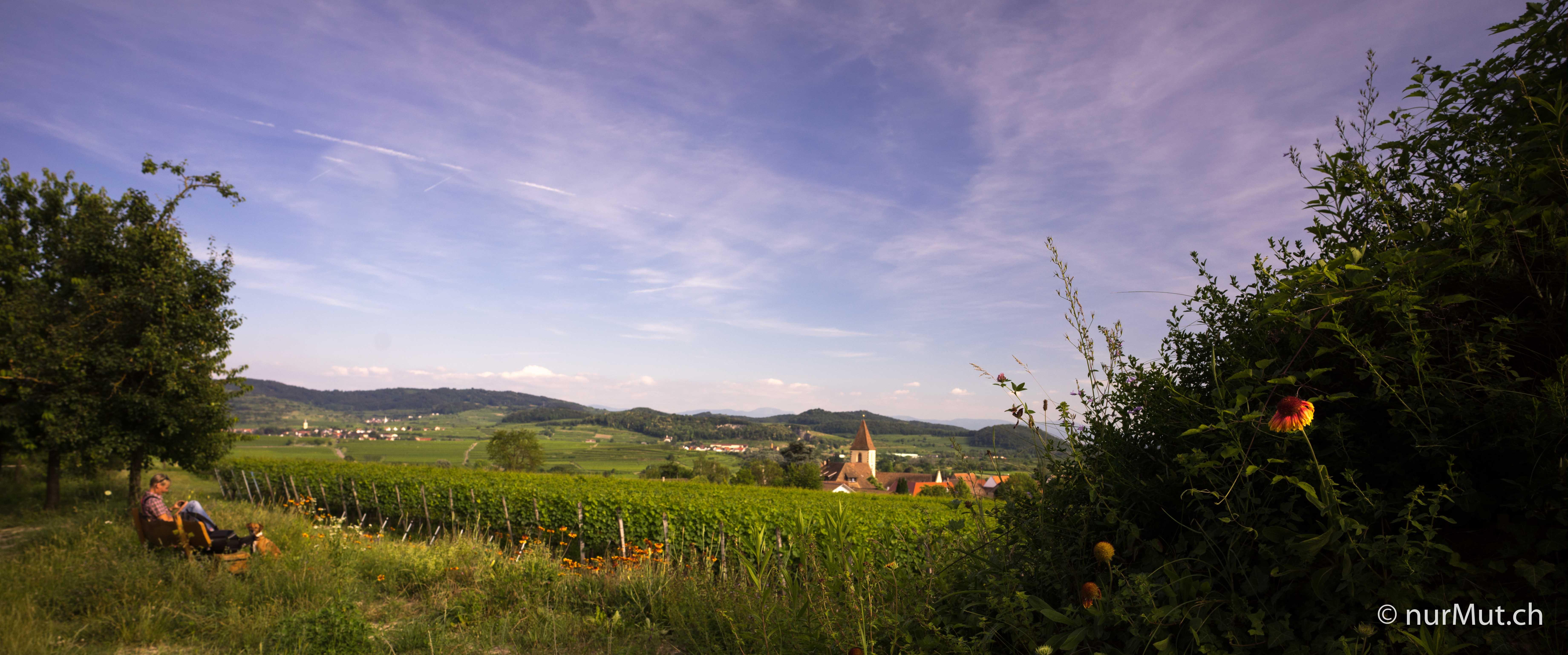 burkheim-kaiserstuhl-schildkroete