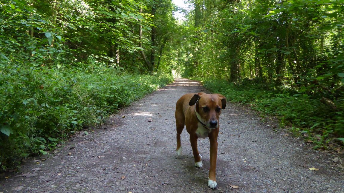 monet-waldweg-rheinaue-hund