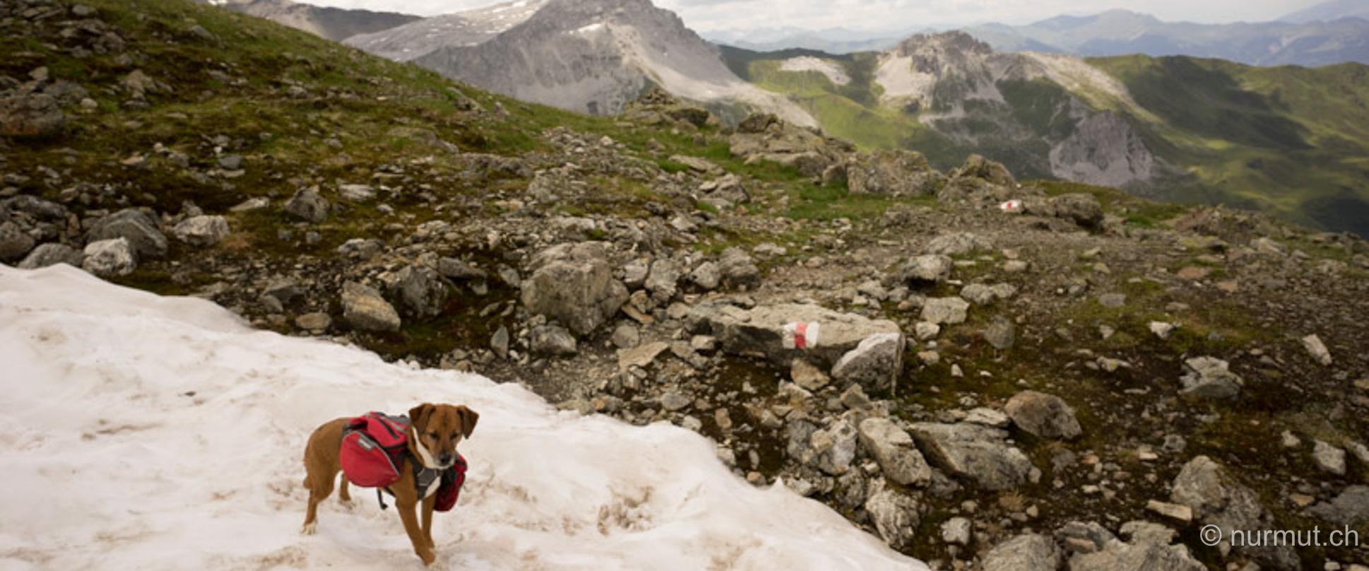 wandern mit hund-st. antoenier joch-gratwanderung-praettigau