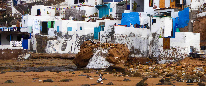 marokkoreise mit hund-marokko mit hund-marokko-infos marokko mit hund-imsouane-dalmatiner-wilde hunde-nurmut