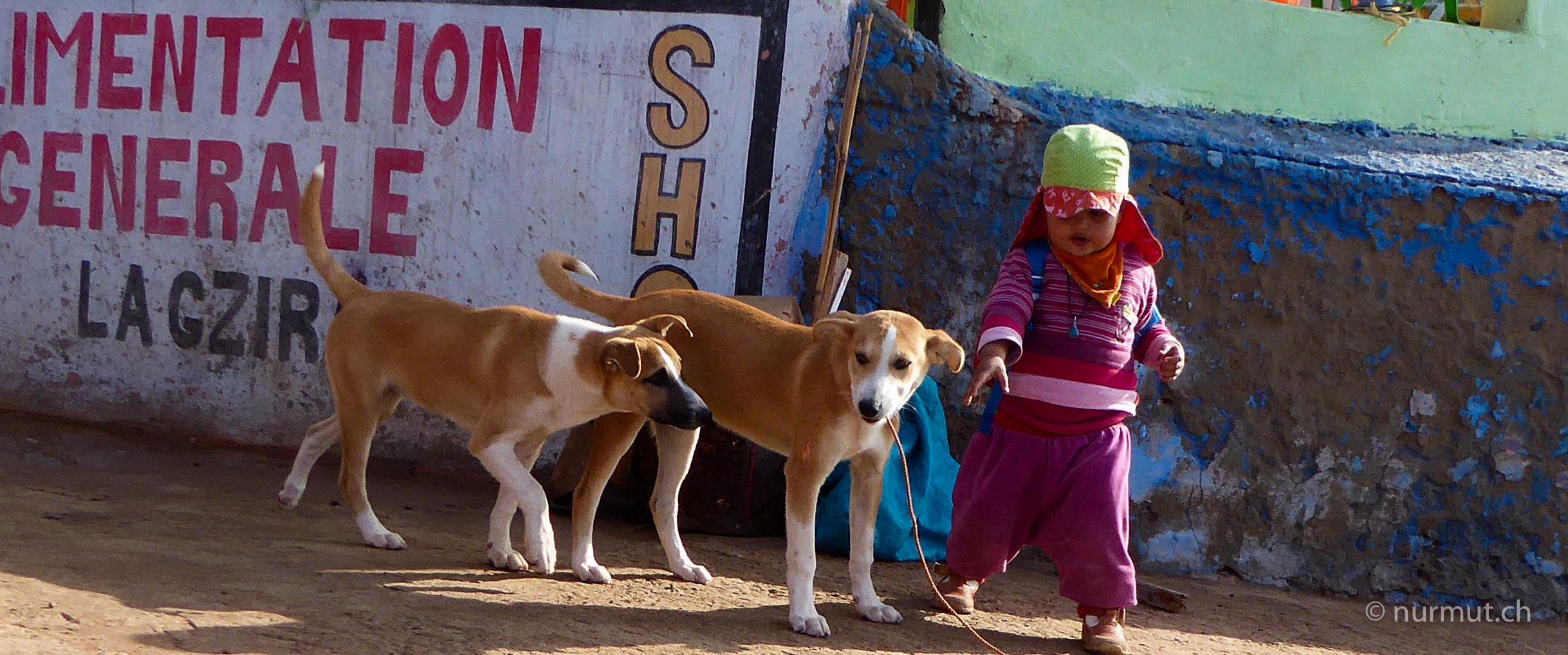 marokkoreise mit hund-marokko mit hund-marokko-infos marokko mit hund-nurmut