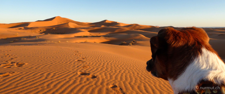 marokkoreise mit hund-marokko mit hund-marokko-infos marokko mit hund-erg chebbi-hund monet_nurmut