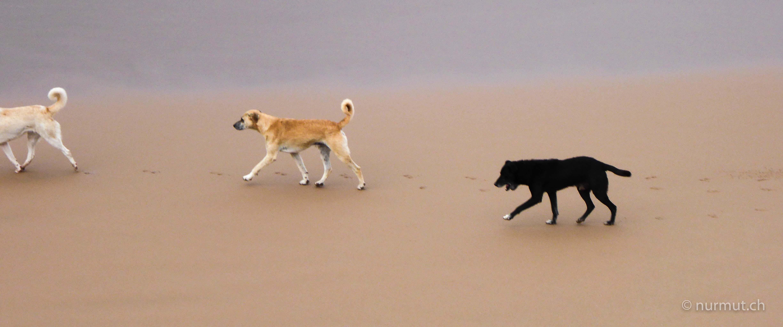 marokkoreise mit hund-marokko mit hund-marokko-infos marokko mit hund-wilde hunde-imsouane-nurmut