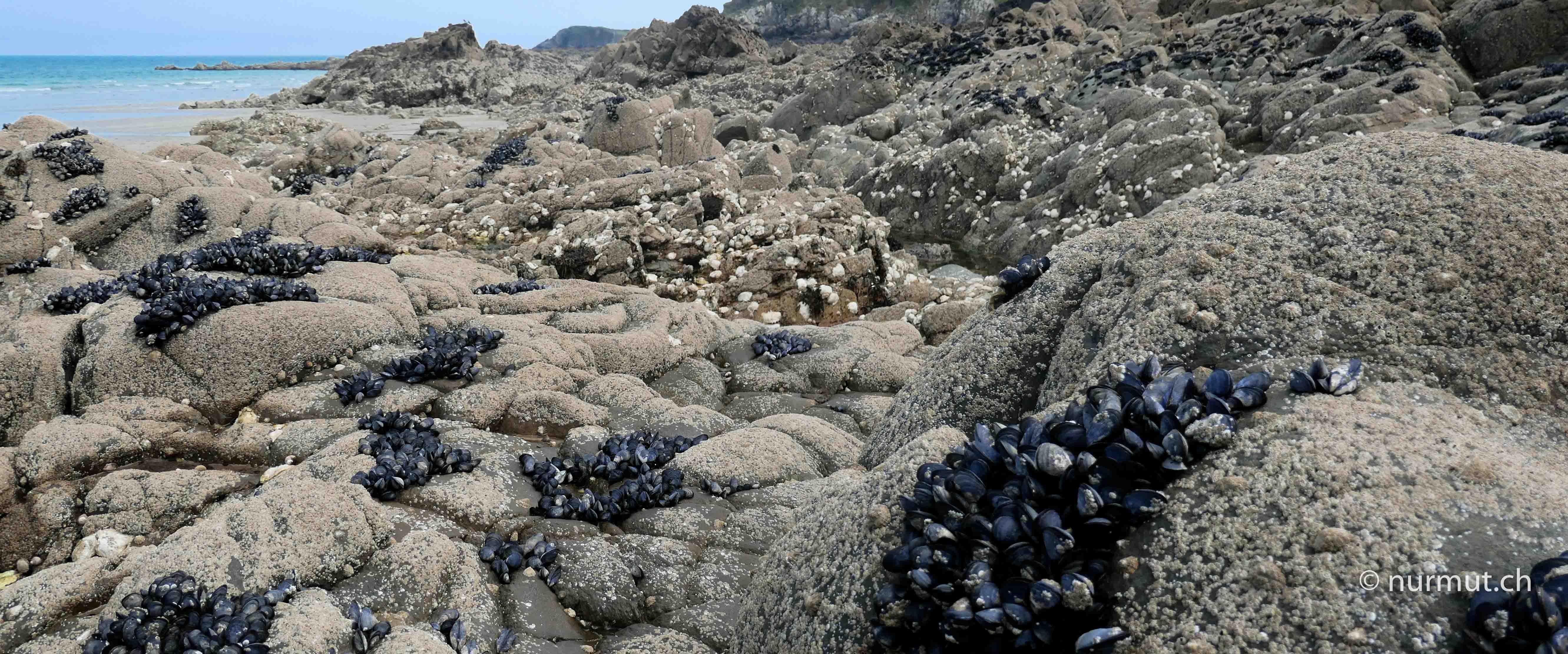 Bretagne-im-Winter-mit Wohnmobil-und-Hund-Miesmuscheln-Küste