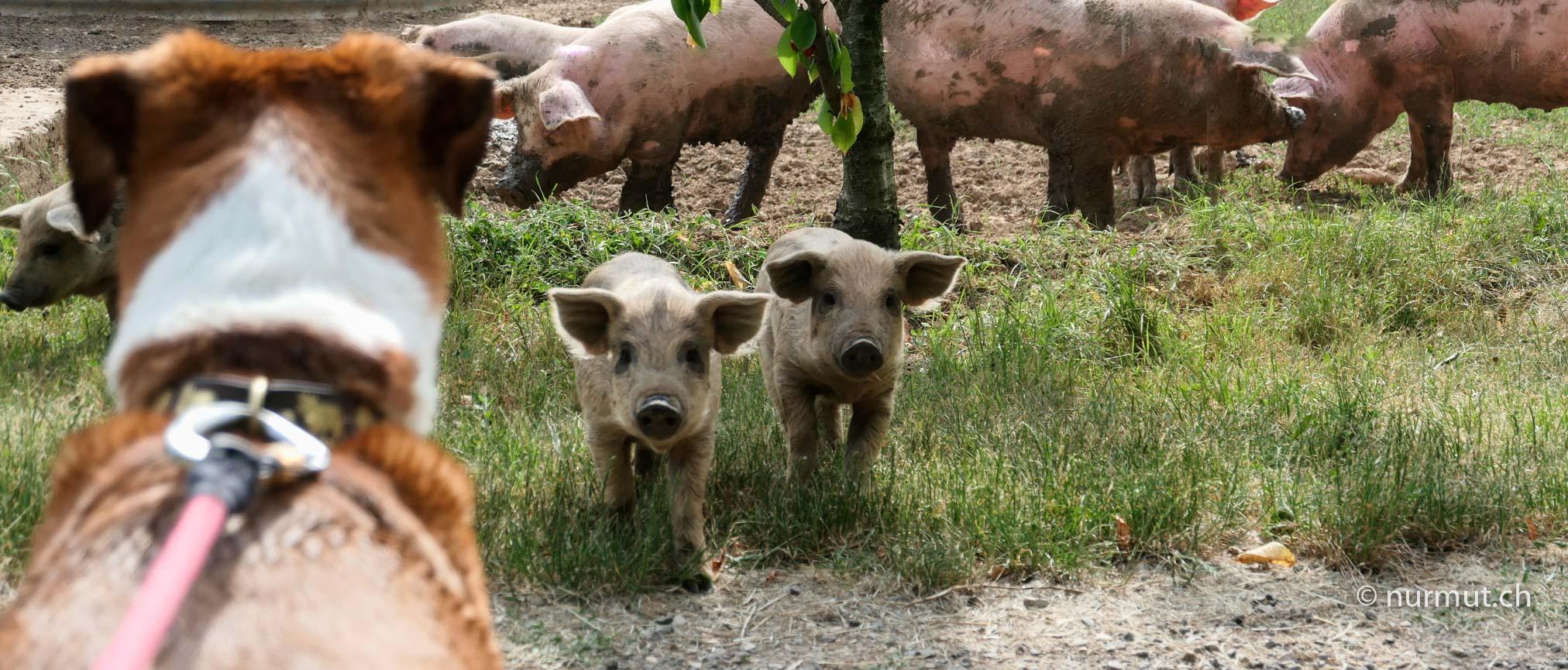 Bretagne-im-Winter-mit Wohnmobil-und-Hund-Schweine-Frischlinge