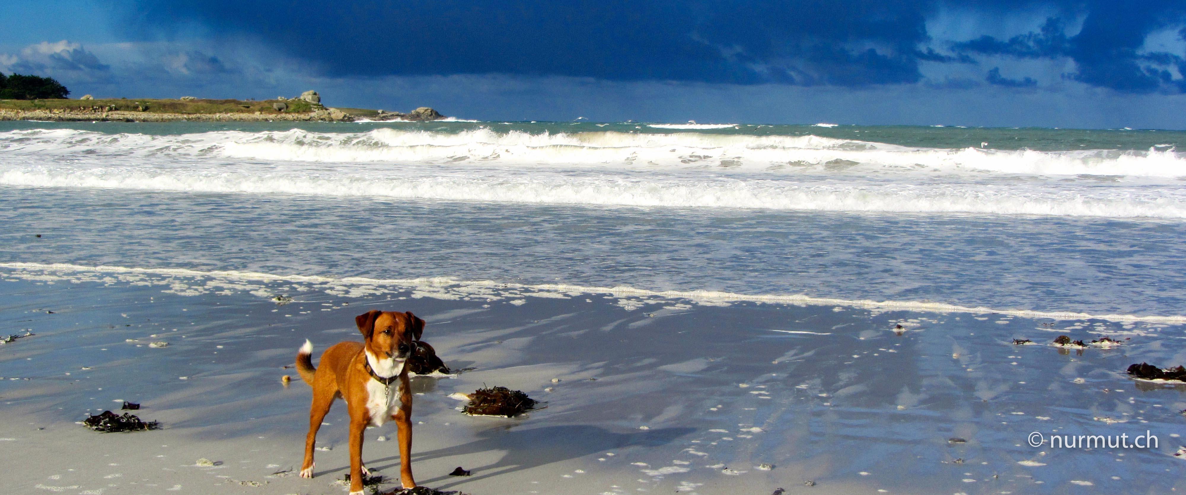 Bretagne-im-Winter-mit Wohnmobil-und-Hund-Strand-Gewitterstimmmung