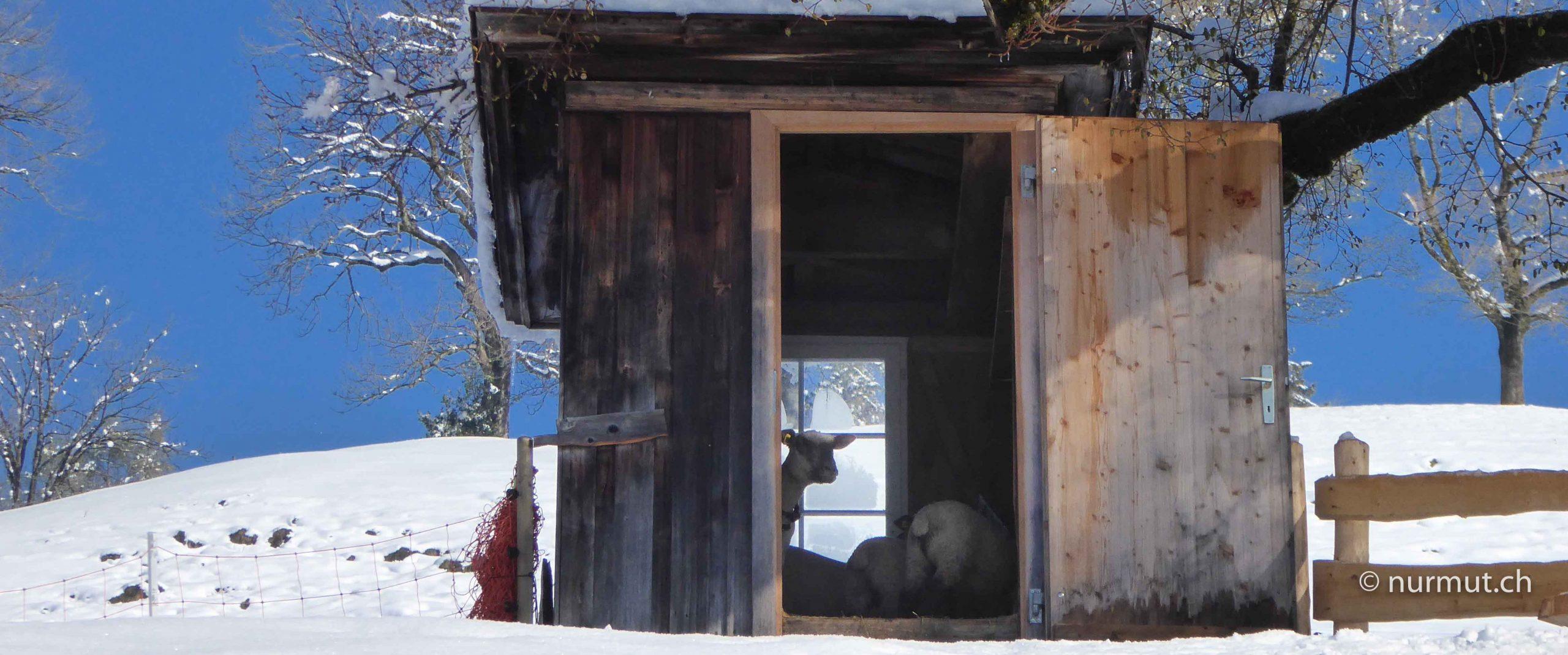 winterwanderung-mit-hund-im-appenzellerland-hier-ist-nicht-alles-kaese