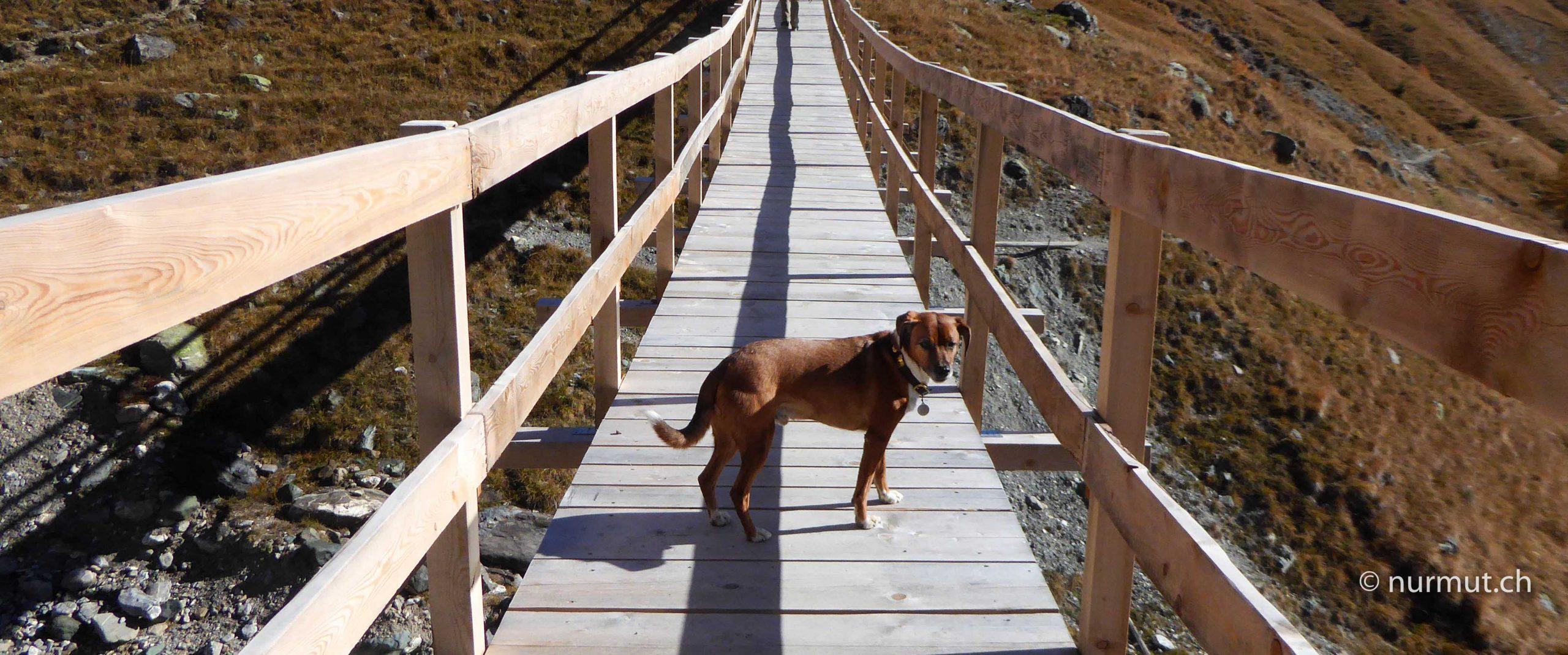 Scuol-im-Unterengadin-Auszeit-mit-Hund