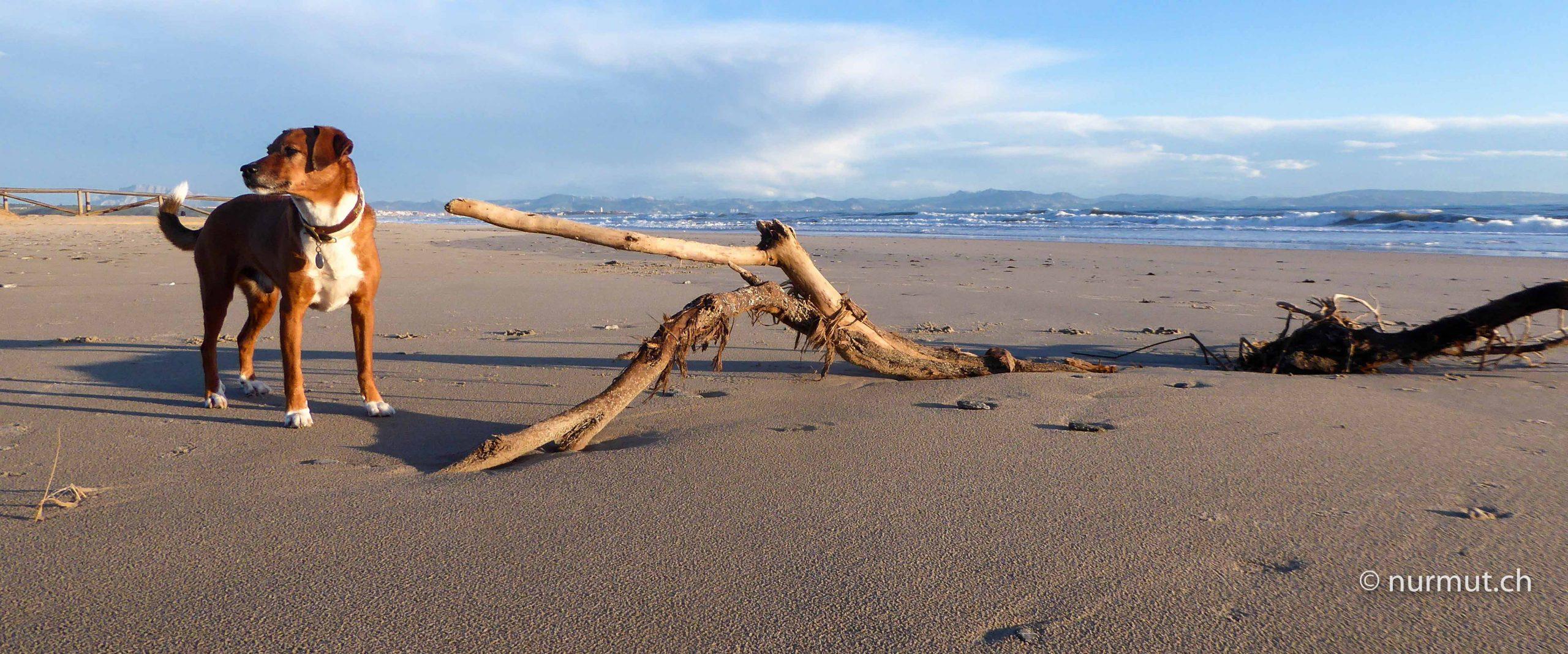 das-unbekannte-spanien-Tarifa-strand-hund-marokkanische-küste